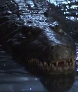 Krokodille-u-båt